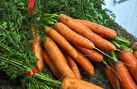 picture of farmer  - Bunches of fresh carrots at a farmer - JPG