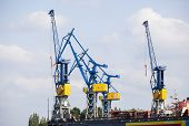 picture of shipyard  - Shipyard with tall cranes in Hamburg Harbor Germany