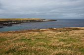 image of falklands  - Grassy meadows on the coast of Bleaker Island in the Falkland Islands - JPG