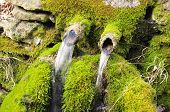 stock photo of waterspout  - Old green mossy stone fountain in Bulgaria - JPG