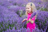 stock photo of lavender field  - happy little girl in a field holding a bouquet of lavender - JPG