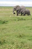 picture of veld  - Mother and young elephant making their way across the open veld in Kenya - JPG
