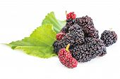 image of mulberry  - Mulberries with leaf isolated on white background - JPG