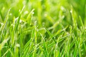 stock photo of morning  - Natural background of grass with drops of morning dew - JPG