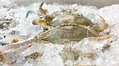 picture of blue crab  - Blue crabs on ice in open buffet restaurant - JPG