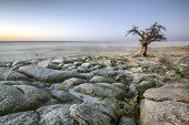 picture of baobab  - A lone baobab tree on the edge of a large salt pan - JPG
