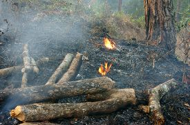 stock photo of unsafe  - Ash from burn dry grass in pine forest with this careless make many forest fire especial in hot season branch of tree were cut damage ecology cause change climate unsafe for environment - JPG