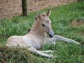 image of foal  - view white foal southern Bohemia  - JPG