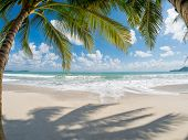 stock photo of beach hut  - tropical beach with coconut palm - JPG