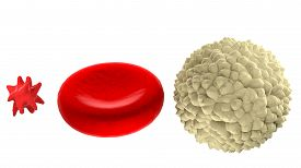 stock photo of leukocyte  - Main blood cells in scale isolated on white background - JPG