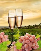 picture of wine grapes  - Champagne with background of seaside vineyard and pink grapes - JPG