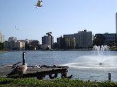 Постер, плакат: Птицы пролетел и висит на озере Мерритт