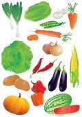 stock photo of batata  - Vector set of 14 fresh vegetables - JPG