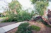 Residential Street With A Fallen Old Mesquite Tree After Annual Summer Monsoon Storm In Phoenix, Ari poster