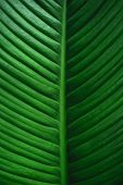 Green Leaf Background Dark Green Leaves Green Leaf Background Dark Green Leaves poster