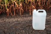 White Plastic Pesticide Chemical Jug In Cornfield As Mock Up Copy Space For Herbicide, Fungicide Or  poster
