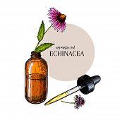 Hand Drawn Set Of Essential Oils. Vector Echinacea Purpurea Flower. Medicinal Herb, Glass Dropper Bo poster