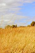 stock photo of hayfield  - A Whimsical Hayfield on a Sunny Day - JPG