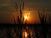 Sunset With Cattail