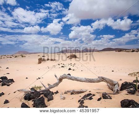 Постер, плакат: Северной части острова Фуэртевентура песчаные дюны Корралехо, холст на подрамнике