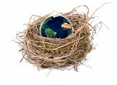 World Nest