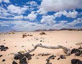 Постер, плакат: Северной части острова Фуэртевентура песчаные дюны Корралехо