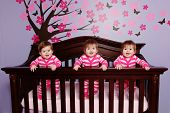 image of triplets  - Sweet Baby Triplets in Crib - JPG