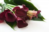 pic of calla  - Beautiful bouquet of calla lilies on white background - JPG