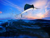 stock photo of swordfish  - sailfish flying over blue sea ocean use for marine life and beautiful aquatic nature - JPG
