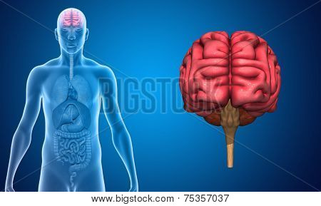 Human brain image id75357037 human brain picture ccuart Images