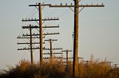 stock photo of utility pole  - An Endless Line of Utility Poles Standing in the Desert - JPG
