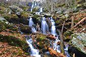 stock photo of hollow  - Shenandoah National Park - JPG