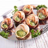 stock photo of escargot  - escargot - JPG