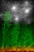 stock photo of coniferous forest  - Magic green coniferous forest with stars in the sky - JPG