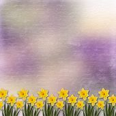 foto of narcissi  - Card for invitation or congratulation with bunch of flower - JPG