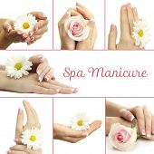 pic of french manicure  - Hands with french manicure and flower in collage - JPG
