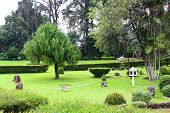 image of royal botanic gardens  - Japanese Garden at the Royal Botanical Garden - JPG