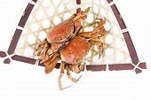 image of cooked crab  - Cooked crab - JPG