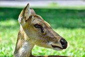 image of antlers  - The Deer  - JPG