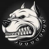 picture of pitbull  - Vector illustration Angry pitbull mascot head - JPG