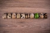 stock photo of quail egg  - Spotted Quail eggs in row with one green egg on wooden background - JPG