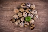 picture of quail egg  - Spotted Quail eggs with one green egg on a wooden background - JPG