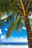 pic of maracas  - Tropical beach palm tree Trinidad and Tobago Maracas Bay - JPG