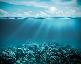 picture of under sea  - Sea or ocean underwater deep nature background - JPG