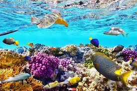 foto of sea life  - Wonderful and beautiful underwater world with corals and tropical fish - JPG