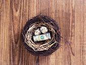 foto of bird egg  - Dollar bills and egg in a birds nest on wooden background - JPG