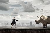 foto of rhino  - Young businesswoman with suitcase walking with rhino on lead - JPG