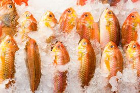pic of red snapper  - Fresh red snapper fish in market - JPG