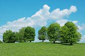 Постер, плакат: зеленые деревья и облачное небо