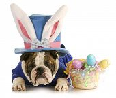image of easter bunnies  - easter dog  - JPG